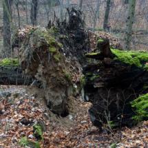 Muszkowicki Las Bukowy