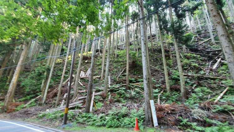 kura, woods broken trees