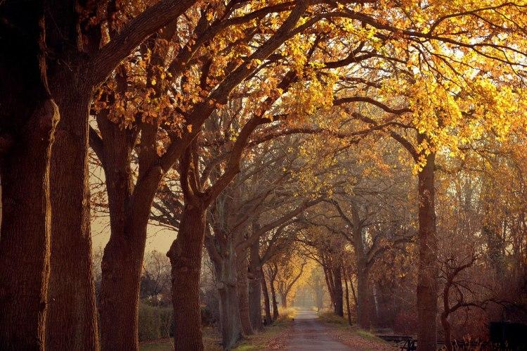 Autumn Passage, yellow leves