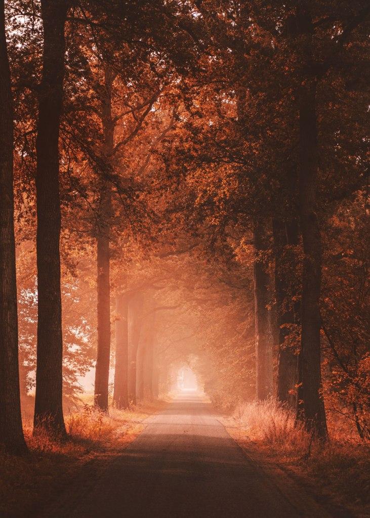 fall warm light on a road