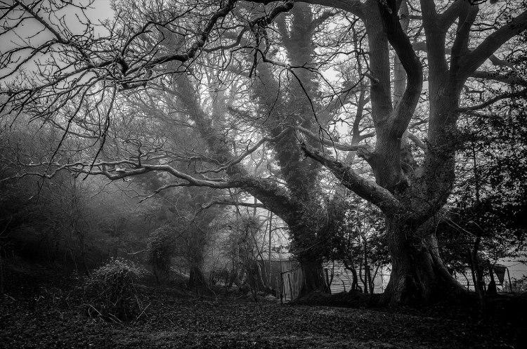 trees , dark moody picture