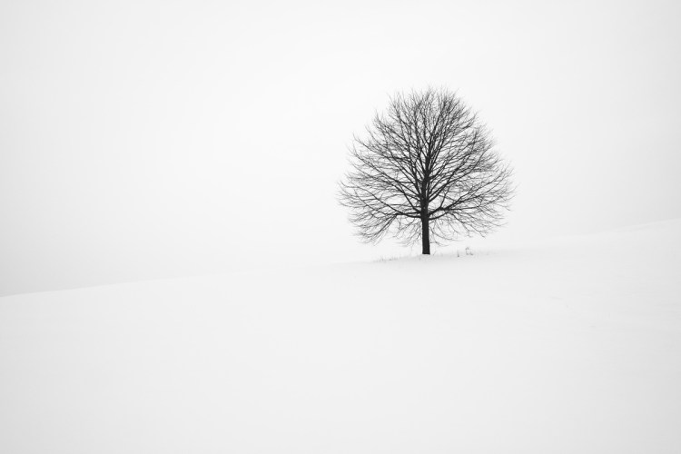 white landscape with the black tree