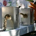ライオンのしっぽを振る投票箱