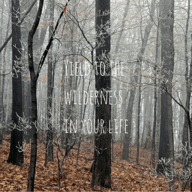 Yield to the wilderness