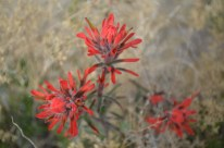 Mojave National Preserve 251