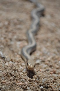 Mojave National Preserve 267