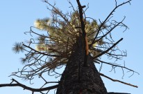 Mighty Trees (3)