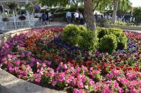The Flower Fields (8)