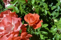 Huntington's Garden Colors (3)