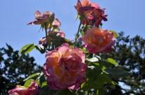 Huntington's Garden Colors (5)