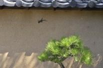 Japanese Garden at the Huntington (6)