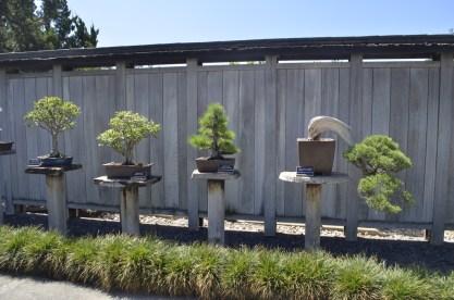 Japanese Garden at the Huntington (9)