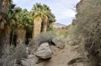 Hiking Andreas Canyon, part 1 of 2 (10)