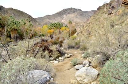 Hiking Andreas Canyon, part 1 of 2 (16)