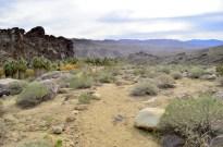 Hiking Andreas Canyon, Part 2 of 2 (10)