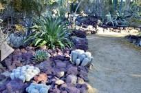 Moorten's Botanical Garden, part 2 (5)