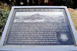 West Fork Trail and Palm Canyon (8)