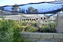 Moorten Botanical Garden, part 3 (9)