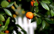 Weekly Photo Challenge, Orange (3)