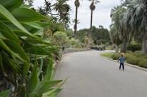 Road to the cactus garden