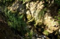 Hiking Oak Canyon Nature Center (23)
