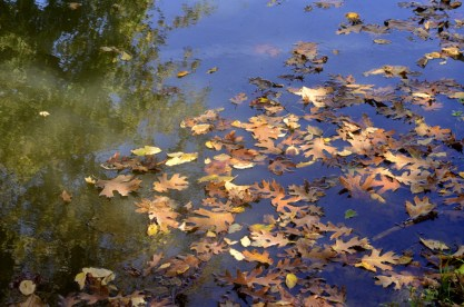 An Autumn Day in Oak Glen (1)