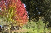 An Autumn Day in Oak Glen (2)