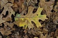 An Autumn Day in Oak Glen (8)