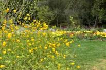 Descanso Gardens in March, part 1 (6)