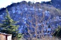 oak-glen-with-snow-part-2-2