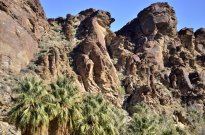 desert-palms-6
