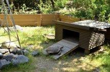 Henry the Desert Tortoise (3)