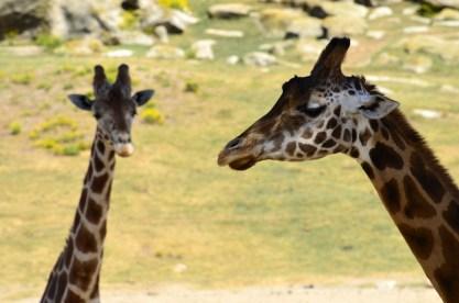 Animals in Profile (1)