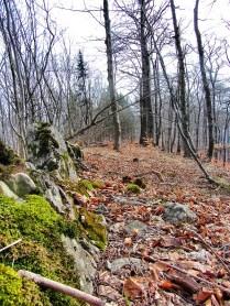 """Breiter Berg"" - Trail"