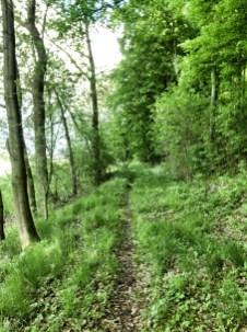 """""""Neuen"""" Singletrail am Waldrand unterhalb vom Steinbergtrail entdeckt"""