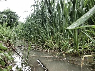 Hier kann nun Reis angebaut werden