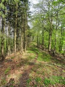 Breiter Berg Trail