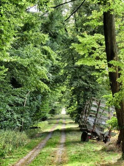 Am Waldrand Richtung Söder