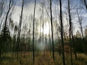 Der schöne Eschenwald am Spukestein