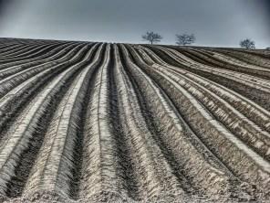 Start im Kartoffelgebiet Klein Escherde