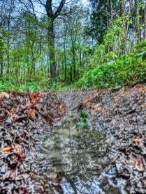 Das ist Trail: Morast und Pfützen....