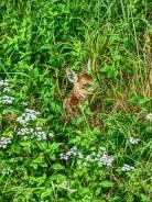 Bambi :-)