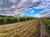 Saatgutgewinnung bei Upstedt