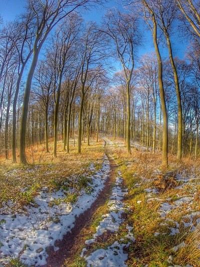 01_09 Salzdetfurther Wald 03