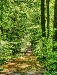 05_07 Hildesheimer Wald 4