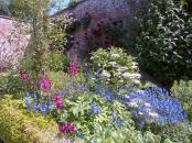 Walled Garden boarder flowers