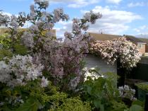 Wonderful Blossoms