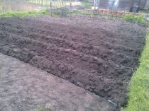Potatoes are now in.. 2 rows of earlies and 6 row of main crop..