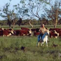Drover, Bert on horseback, outback Queensland