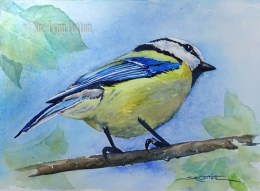 Blue Titmouse $88